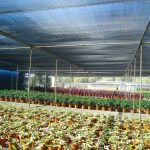 ALLPRO Commercial Horticultural Shade Fabric
